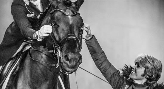 3 Consejos a la hora de escoger un caballo de Adiestramiento (FEI)