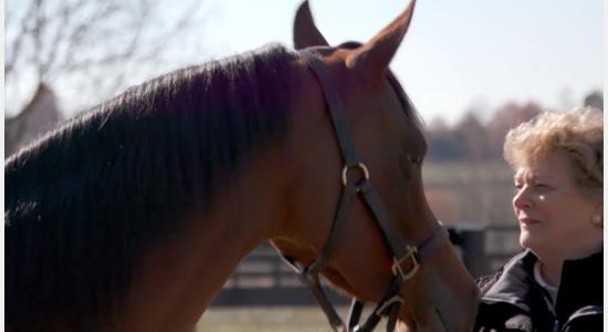 Cuidado de la crin y cola del caballo Árabe (USEF)