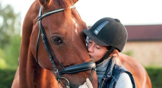 ¿Compro o alquilo un caballo? (FEI)