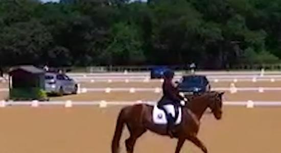 Enseñarle a un caballo joven ejercicios nuevos (FEI)